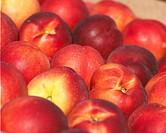 Prunus persica var. nucipersica