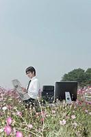 HwaSung_Si, gyeonggi_do, south korea, cosmos, flower
