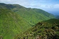 Pico da Vara  This mountain is a special protection area, habitat of the endangered Azores bullfinch pyrrhula murina  Sao Miguel island, Azores island...