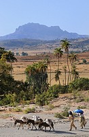The dirt road to Gheralta. Tigray. Ethiopia.