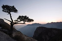 Pine tree silhouetted at dusk on Lushan mountain, UNESCO World Heritage Site, Jiangxi Province, China, Asia