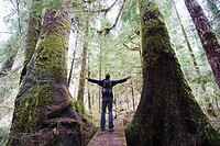 A hiker in the old growth forest at Carmanah Walbran Provincial Park, Vancouver Island, British Columbia, Canada, North America