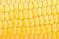 Corn on the cob full_frame