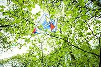 Kite stuck in tree