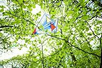 Kite stuck in tree
