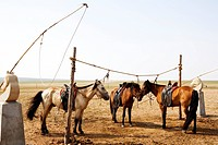 Horses tied up in Hulun Buir Grassland, Manzhouli, Hulunbuir City, Inner Mongolia Autonomous Region, China