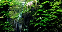 Water flow over moss covered rocks in forest, Yuntai, Mianyang, Sichuan province, Szechuan, China