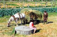 Farming. Galicia, spain