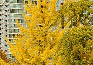 fall colour on trees, False Creek, Vancouver, BC, Canada