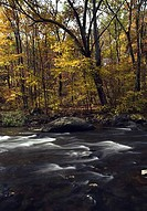 River flowing through a forest, Musconetcong River, Stephens State Park, New Jersey, USA