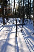 Trees in a forest, Kejimkujik National Park, Nova Scotia, Canada