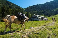 Supply of Willersalpe only by horses, Hinterstein, Hintersteiner Valley, Bad Hindelang, Allgaeu, Bavaria, Germany, Europe