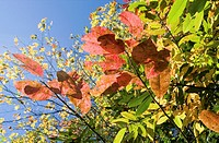 explosion of color in leaves