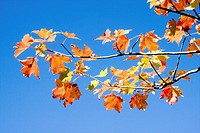 perfect orange branch against perfect blue sky