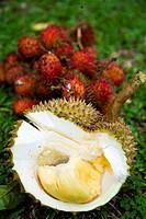 Close_up of Durian and rambutan fruits, Tanjung Tokong, Pulau Pinang, Malaysia