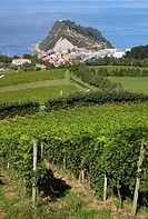 ´Txakoli´ vineyards, Getaria, Gipuzkoa, Euskadi, Spain