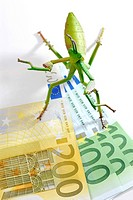 Locust on bank note, symbolic image for hedge funds