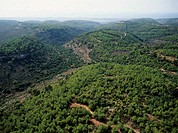 Aerial photograph of the Carmel forest