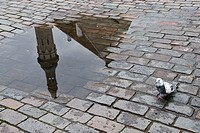 Reflection of the townhall on a puddle and a pigeon in the street, Tallin, Estonia, Europa