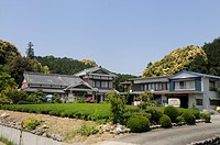 Tea plantations, tea gardens, with traditional farmhouses, Sagara, Shizuoka Prefecture, Japan, Asia