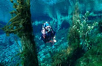 diver, at the freshwater springs, New Zealand, Golden Bay, Pupu Springs