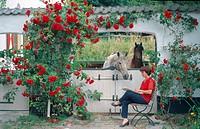 domestic horse Equus przewalskii f. caballus, a life with horses