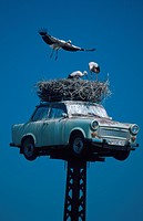 white stork Ciconia ciconia, nest on Trabant, Germany, Brandenburg, Neuruppin
