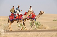 Indians on camels in Jaisalmer, Rajasthan, northern India, Asia