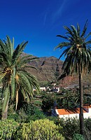 Ermita de los Reyes Church in Valle Gran Rey, date palms, palm trees, La Gomera, Canary Islands, Spain, Europe