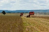 Plantation of Soy, Palmas, Tocantins, Brazil