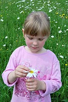 He loves me, he loves me not, 5-year-old girl plucking an Oxeye Daisy (Leucanthemum vulgare)