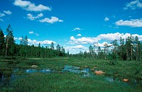 mire, with blue sky, Sweden, Lappland