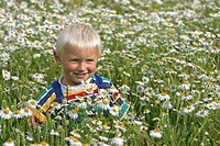 scentless mayweed, scentless chamomile Tripleurospermum perforatum, Tripleurospermum inodorum, Matricaria inodora, boy in a flowering meadow