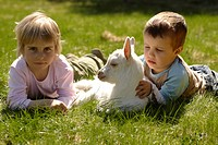 3-year-old boy and girl, with a goatling