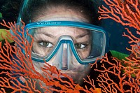 Diver behind a Gorgonian looking into the camera, Indonesia, Southeast Asia
