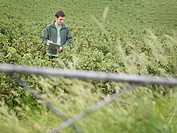 Man Inspecting Blackcurrants In Field