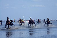 domestic horse Equus przewalskii f. caballus, horse race in the mud flats, Germany, Lower Saxony, Cuxhaven