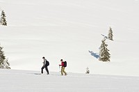 Snowshoe hikers, Feldberg, Black Forest, Baden_Wuerttemberg, Germany, Europe