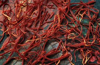 saffron Crocus sativus, saffron, most expensive spice of the world