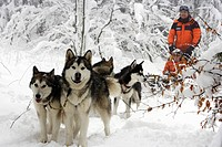 Dog sled in deep snow