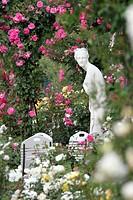 rose Rosa spec., Rose rose trial garden Beutig, Germany, Baden_Wuerttemberg, Baden_Baden