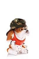 Bulldog figurine wearing a camouflage cap