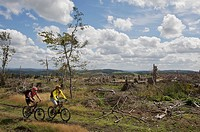Mountain bike riders riding along the border ridgeway, deforested by cyclone Kyrill, between North Rhine_Westphalia and Hesse, north of Willingen, Hes...
