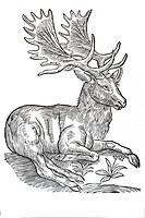 Woodcut, Sambar (Hippelaphus), Conrad Gesner, Historia Animalium, 1551, Renaissance