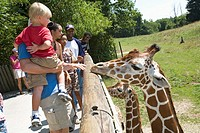Battle Creek, Michigan - Visitors study the giraffes in the Wild Africa exhibit at the Binder Park Zoo