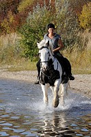 Horsewoman on Irish Tinker Horse in the water