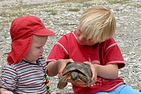 margined tortoise, marginated tortoise Testudo marginata, inspecting by two children, Greece
