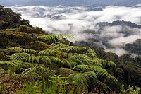 is a montane rainforest, Rwanda, Nyungwe forest reserve