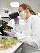 Scientist examining sprouts in petri dish with microscope
