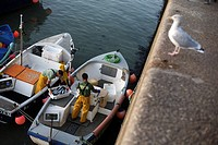 Fisherman unloading their catch at St Ives harbour in Cornwall
